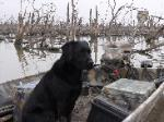 Training retrievers in north texas