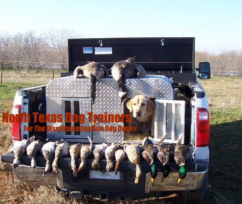 North Texas Duck Hunting|Dukes first North texas Duck Hunt