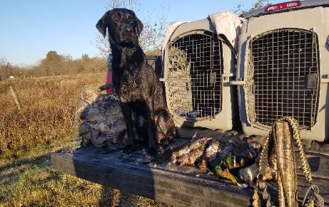 North Texas Dog Trainers/train to hunt/north Texas Retriever trainers